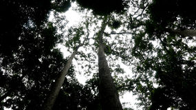 Тропический лес Борнео Стоковая Фотография