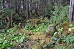 Тропический лес в Аляске Стоковое Изображение