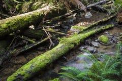 Тропический лес в национальном парке поля держателя, Тасмании Australi Стоковое фото RF