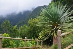 Тропический лес в острове Palma Ла, Canaries Стоковое фото RF