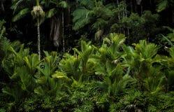 Тропический лес Гаваи стоковые изображения