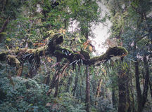 Тропический лес деревьев Relict на солнечном свете Стоковые Изображения RF
