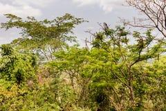 Тропический лес национального парка Khao yai Стоковая Фотография