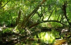 Тропический лес на Индийском океане Стоковые Изображения RF
