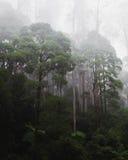 Тропический лес на туманном утре Стоковое Фото