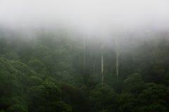 Тропический лес на туманном утре Стоковая Фотография RF