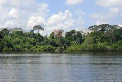Тропический лес от реки, Амазония, эквадор Стоковые Изображения