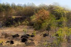 Тропический лес очень горячий и яркий стоковые фотографии rf