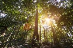 Тропический лес пирамид из камней Стоковое фото RF