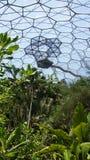 Тропический лес проекта Eden в St Austell Корнуолле стоковые изображения rf