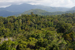 Тропический лес Стоковое фото RF