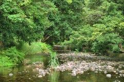 Тропический лес Стоковая Фотография RF
