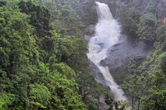 Тропический лес Стоковые Фотографии RF