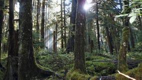 Тропический лес Hoh Стоковая Фотография