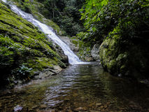 Тропический лес Lupa Masa на Борнео Стоковая Фотография