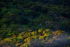 Тропический лес Sinharaja, Шри-Ланка Стоковое Фото