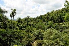 Тропический лес (Soroa, Куба) Стоковые Фотографии RF