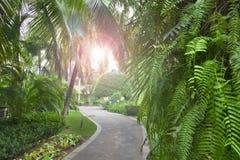 Тропический летний день солнца сада стоковые фотографии rf