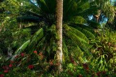 Тропический завод в парке стоковые изображения
