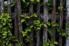 Тропический завод с зеленым фото крупного плана лист Деревенская деревянная загородка и зеленая ветвь дерева Стоковая Фотография RF