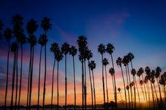 Тропический заход солнца пляжа с пальмами в Санта-Барбара, Californ Стоковая Фотография RF