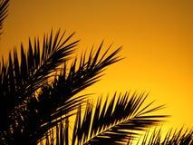 Тропический заход солнца Стоковые Фотографии RF