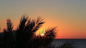 Тропический заход солнца сток-видео
