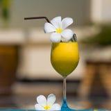 Тропический коктеил стоковое изображение rf
