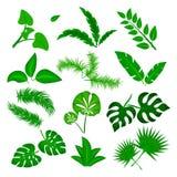 Тропический комплект вектора листьев изолированный на белой предпосылке Различное зеленое собрание лист Флора леса джунглей Банан иллюстрация штока