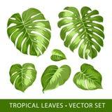 Тропический комплект вектора листьев Стоковая Фотография