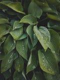 Тропический конец-вверх листьев, парник, атмосферическая предпосылка, Se Стоковые Фото