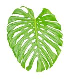 Тропический конец лист вверх с падениями воды Стоковые Изображения RF