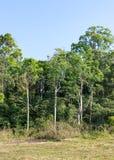 Тропический край леса стоковая фотография rf