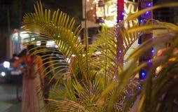 Тропический крупный план лист на красочных абстрактных светах запачкал backg Стоковые Фото