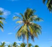 Тропический крупный план пальмы острова небо предпосылки голубое яркое Стоковая Фотография RF