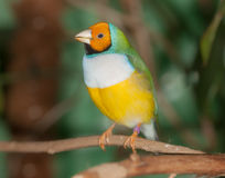 Тропический крупный план птицы Стоковые Фотографии RF