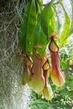 Тропический кувшин стоковое изображение