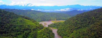 Тропический лес Амазонки в национальном парке Manu, Перу стоковое изображение rf
