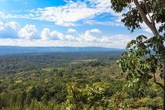 Тропический лес в сердце саванны Лес Кения Kakamega, Восточная Африка стоковые изображения