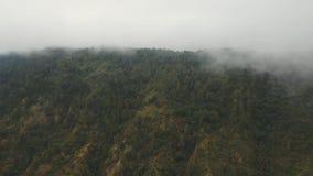 Тропический лес в тумане и облаках bali Индонесия стоковое изображение