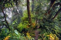 Тропический лес Гималаев Стоковая Фотография RF