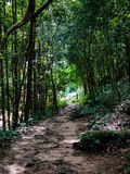 Тропический лес на чем национальный парк Sadet на Koh Phanagn, тайском Стоковые Изображения RF
