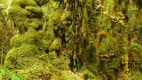 Тропический лес, олимпийский национальный парк, Вашингтон стоковые изображения