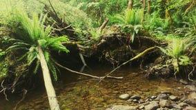 Тропический лес стоковая фотография