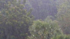Тропический ливень в джунглях против фона зеленого леса с пальмой акции видеоматериалы
