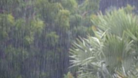 Тропический ливень в джунглях против фона зеленого леса с пальмой сток-видео