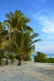 Тропический мечт пляж Стоковая Фотография RF
