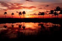 Тропический огонь Солнця Стоковая Фотография