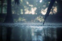 Тропический дождь Стоковое Изображение RF