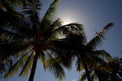 Тропический остров, горизонт Стоковое Фото